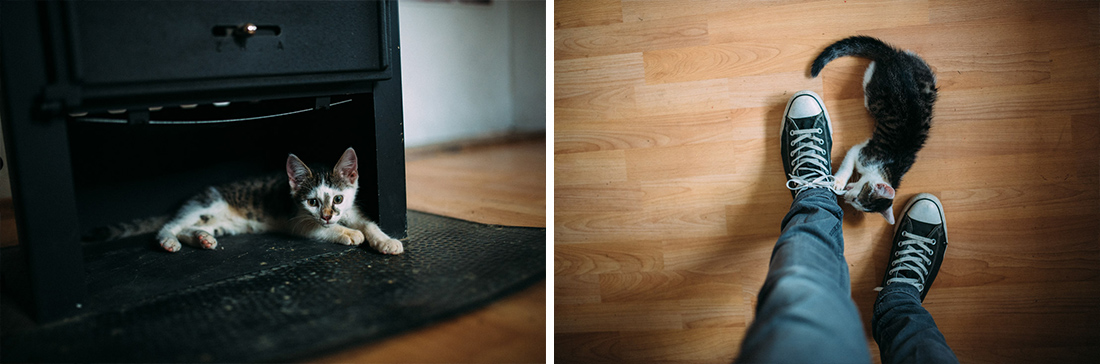 Kleine Katze spielt