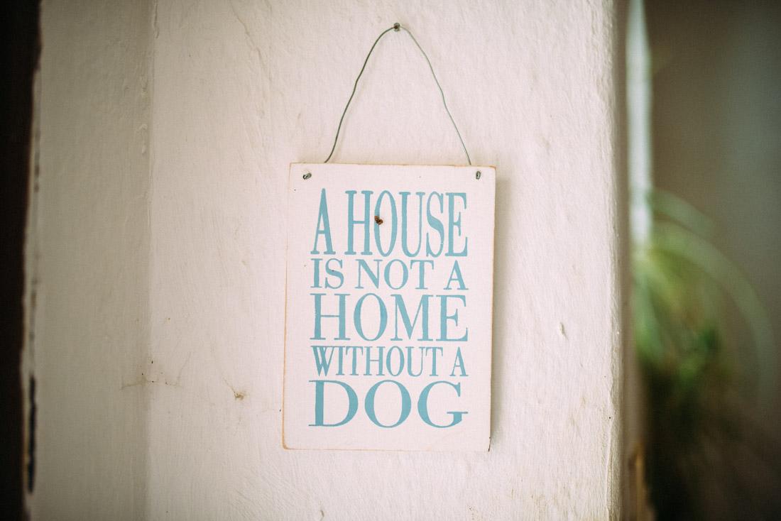 Jeder braucht einen Hund zu Hause